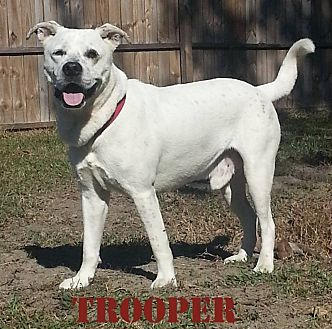 Blue Heeler/Pointer Mix Dog for adoption in Golsboro, North Carolina - TROOPER