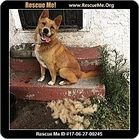 Adopt A Pet :: Keller - Lomita, CA