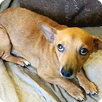 Adopt A Pet :: Seneca - Andalusia, PA