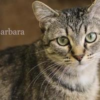 Adopt A Pet :: Barbara - West Des Moines, IA