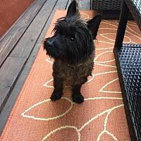 Adopt A Pet :: Ralphie - greenville, SC