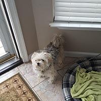 Adopt A Pet :: Teddy *Adoption pending - Barnegat, NJ