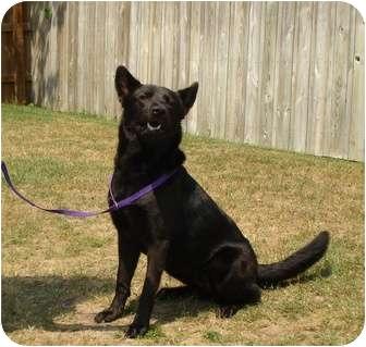 German Shepherd Dog/Chow Chow Mix Dog for adoption in Morehead City, North Carolina - Princess Adelle