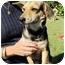 Photo 1 - Dachshund/Shepherd (Unknown Type) Mix Dog for adoption in Foster, Rhode Island - Rocky