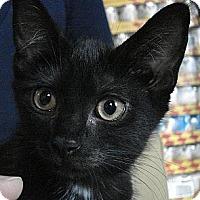 Adopt A Pet :: Judge - Brooklyn, NY