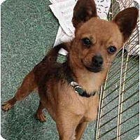 Adopt A Pet :: Flaco - Fowler, CA