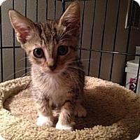Adopt A Pet :: Tracy - East Hanover, NJ