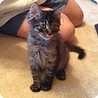 Adopt A Pet :: Teddy - Richmond, VA