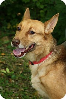 Shepherd (Unknown Type) Mix Dog for adoption in Anderson, Indiana - Darla