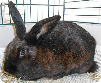 Other/Unknown Mix for adoption in Chambersburg, Pennsylvania - Velveteen