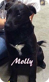 Labrador Retriever Mix Puppy for adoption in Ahoskie, North Carolina - Molly