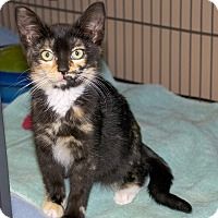 Adopt A Pet :: Sootyfoot - Sunderland, ON