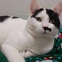 Adopt A Pet :: Julius - Oakland, OR