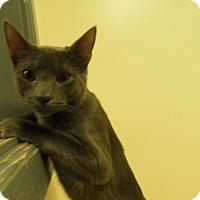 Adopt A Pet :: Noah - Milwaukee, WI