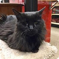 Adopt A Pet :: Ebony - Colmar, PA