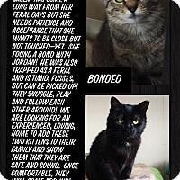 Adopt A Pet :: Salem - CLEVELAND, OH