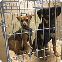 Adopt A Pet :: Reego - Citrus Heights, CA
