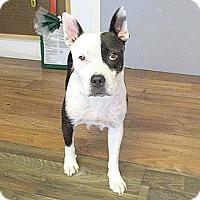 Adopt A Pet :: 17-d04-011 Gidget - Fayetteville, TN