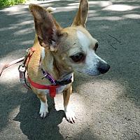 Adopt A Pet :: Katie - Sharon, CT