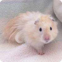 Adopt A Pet :: Pippin - Monrovia, MD