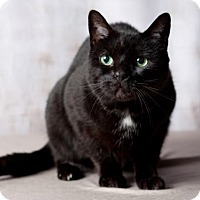 Adopt A Pet :: Kitty - Rochester, NY