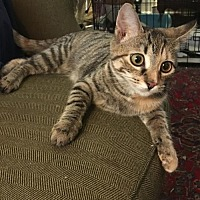 Adopt A Pet :: Tezla - Columbia, SC