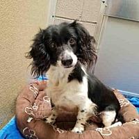 Adopt A Pet :: SARAH - Fairfield, CA
