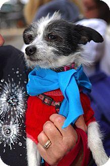 Chihuahua Mix Dog for adoption in North Brunswick, New Jersey - Winnie