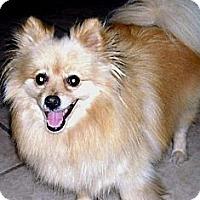 Adopt A Pet :: Summer - Lodi, CA