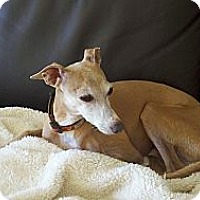 Adopt A Pet :: Mr. Fabulous - Costa Mesa, CA