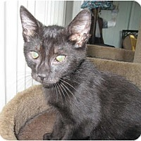 Adopt A Pet :: Blackie - Catasauqua, PA