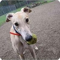 Adopt A Pet :: Jackson (Lucky Jackson) - Chagrin Falls, OH