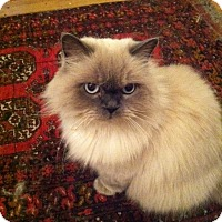 Adopt A Pet :: Misty - Laguna Woods, CA