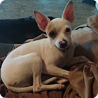 Adopt A Pet :: Elsie - AUSTIN, TX