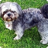 Adopt A Pet :: Buddy - Toronto, ON