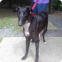 Adopt A Pet :: Jet Black Leader - Gerrardstown, WV