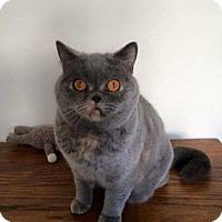 Adopt A Pet :: Wi Chi - Beverly Hills, CA