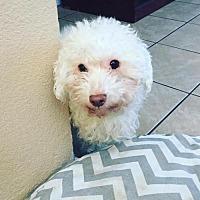 Adopt A Pet :: Dino - Tucson, AZ