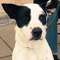Border Collie Mix Dog for adoption in Clifton, Texas - Zoey