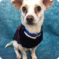 Adopt A Pet :: Liam - Lake Elsinore, CA