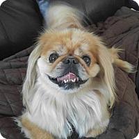 Adopt A Pet :: Simba - Oakdale, TN