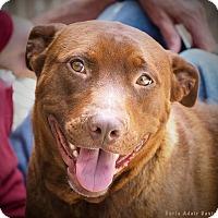 Adopt A Pet :: Robyn Heartz - Lincolnton, NC