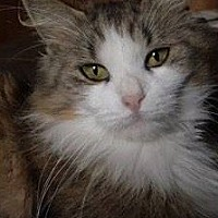 Adopt A Pet :: Lucy - Painted Post, NY