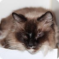 Adopt A Pet :: Rosie - Greensboro, NC