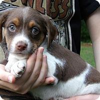 Adopt A Pet :: Ford (4 lb) Video - Williamsport, MD