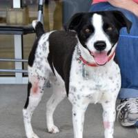 Adopt A Pet :: Pearl - Florence, AL