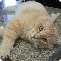 Adopt A Pet :: Oscar - Shelbyville, TN