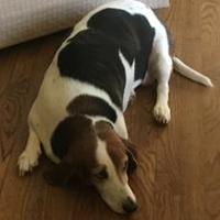 Adopt A Pet :: Bucky - Fairfax, VA