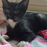 Adopt A Pet :: Harvey - Herndon, VA