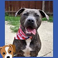 Adopt A Pet :: Hudson - Columbus, OH